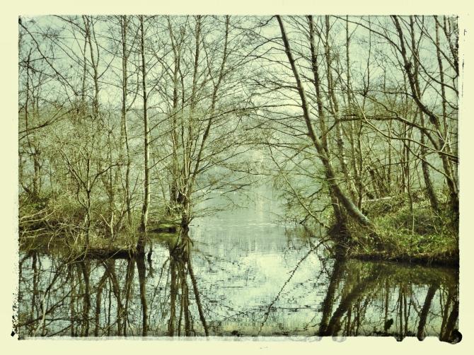 Fishermen's lake Frimley lakes